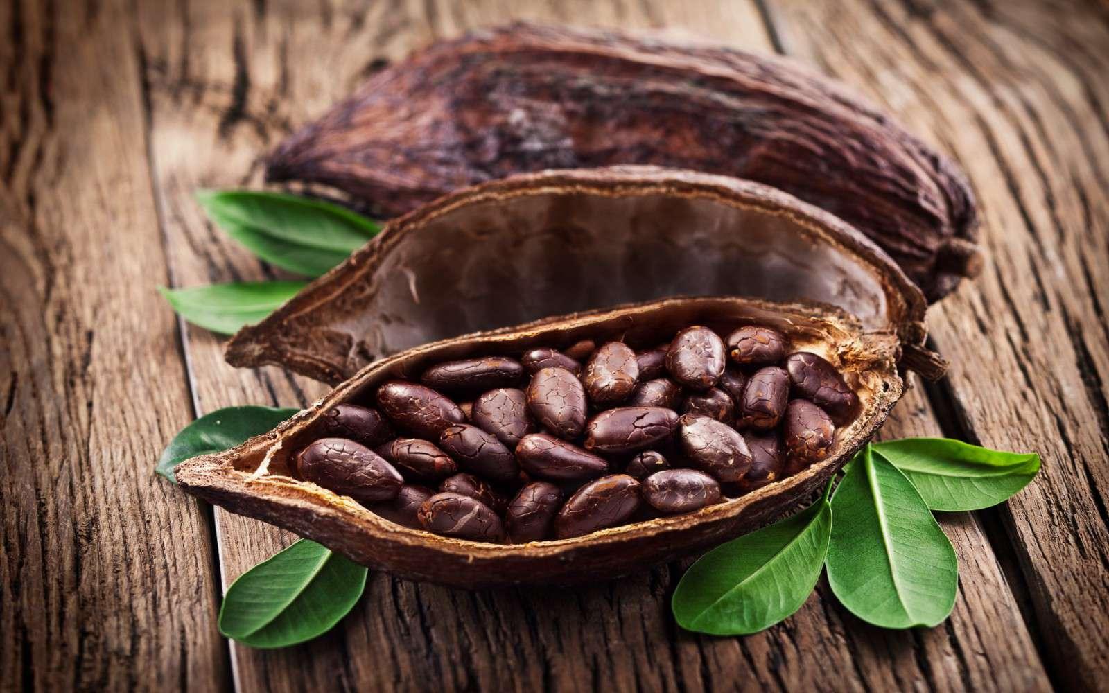 какао из доминиканы фото 2