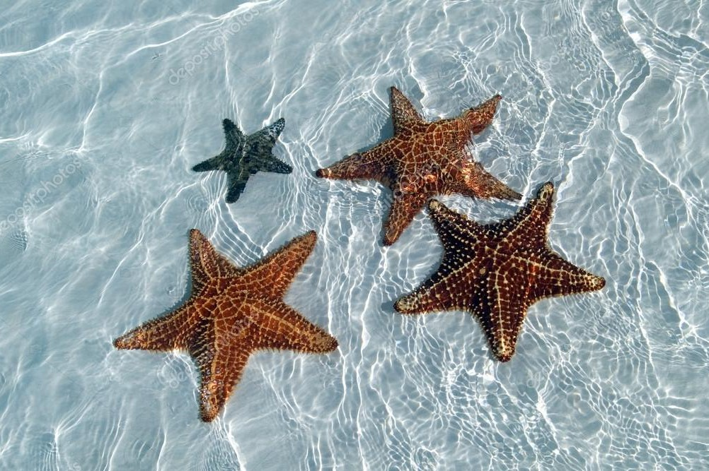 морские звезды 3
