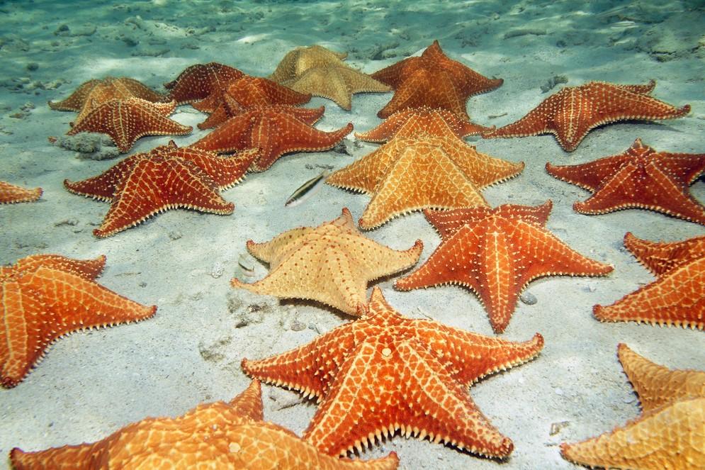 морские звезды 2