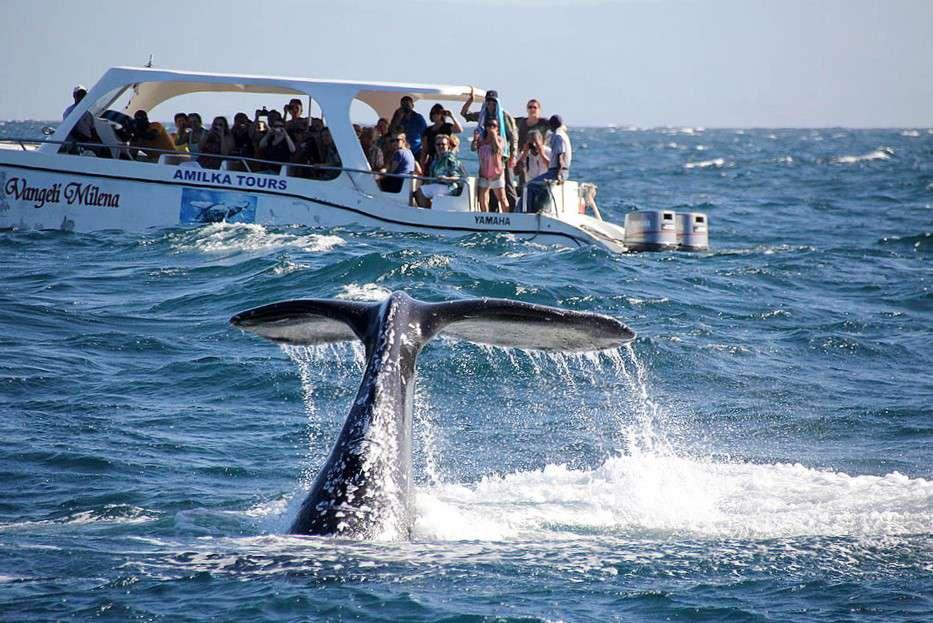 11 вещей, которые надо сделать в Доминикане фото 2