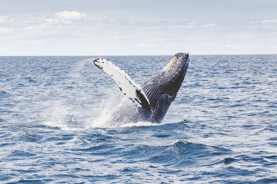 киты Доминикана