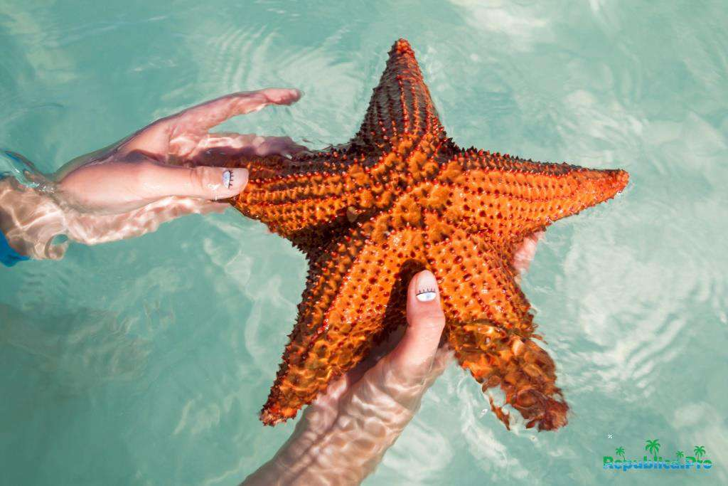 морские звезды 5